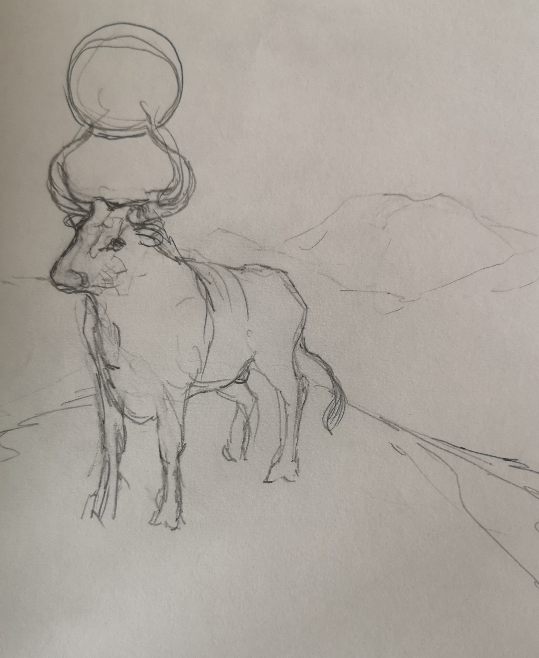 drawings pencil bull sun