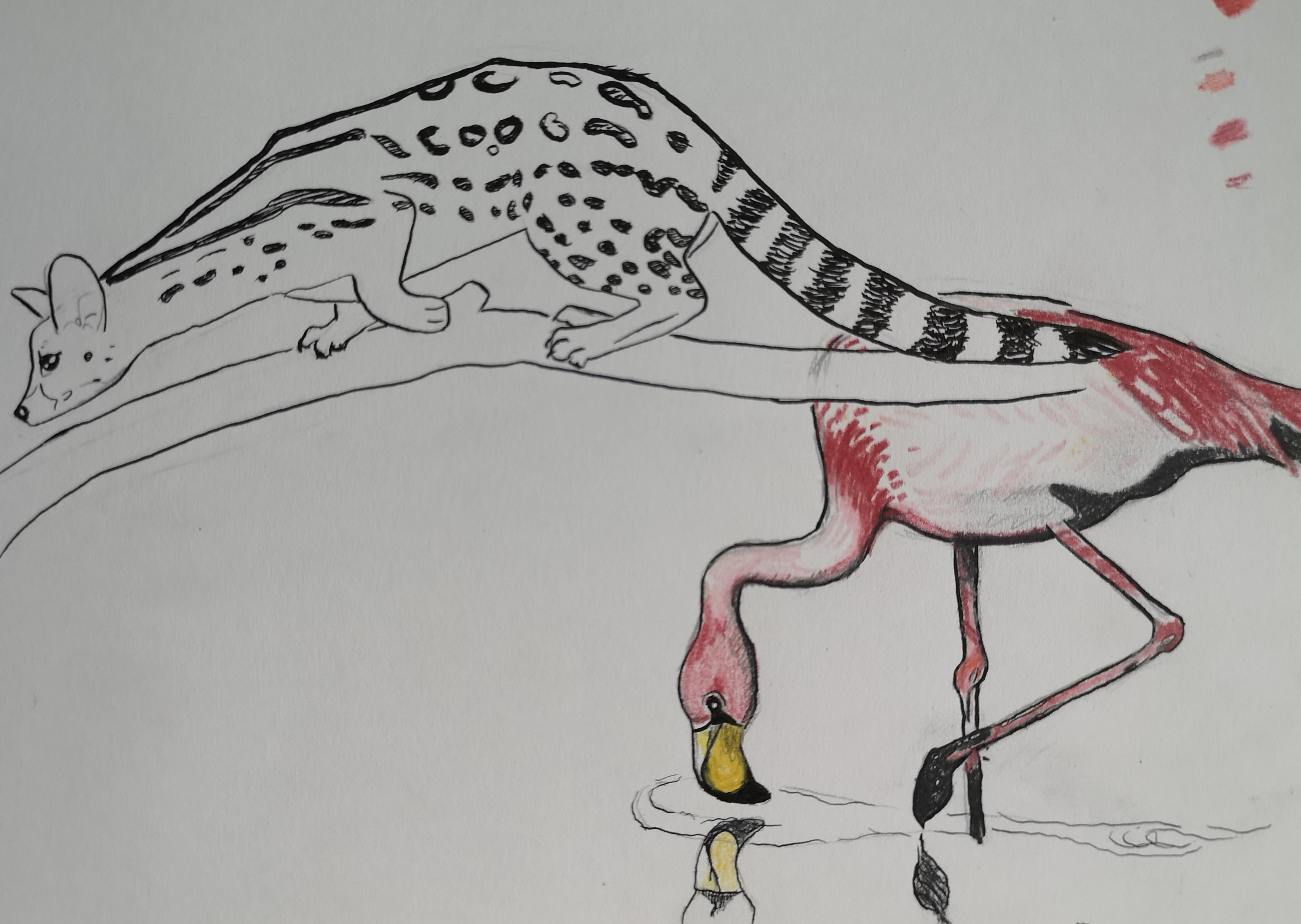 flamingo serval cat drawing ink